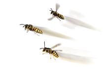 Wespen vertrieben mit Wasp fly home Wespenspay