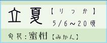 立夏【りっか】:蜜柑