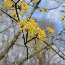 黄色い花が咲く木の名前