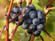 Les vins de l'Anjou à base de Cabernet Franc et Chenin, oenotourisme, hébergement