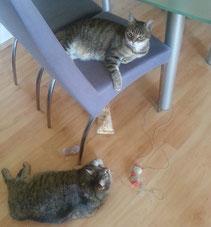 Berta und Gucki