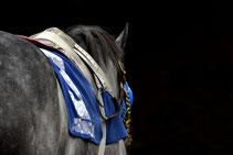 Renn-Pferd mit Renn-Sattel