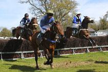 Renn-Pferde beim Hindernis-Rennen, Sprung über Hindernis
