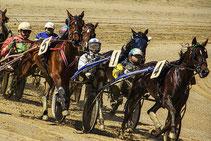 Bild: Pferde beim Trab-Renenn