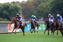 Pferde-Rennen auf Gras