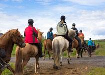 Gruppe mit Pferden beim Reitausflug