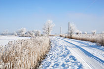 Landschaft Ostfriesland im Schnee
