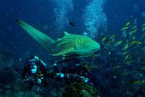 Mit einer Tauchsafari zu den besten Tauchplätzen der Similan Islands.