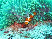 Lernen Sie beim Tauchen die bunte Fischwelt Thailands kennen.