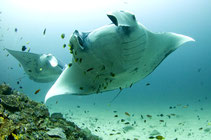 Experience the most beautiful dives in the southern Andaman Sea of Thailand.