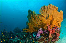 Top diving tours from Phuket to the best dive sites in Thailand.
