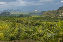 Auf Ihrem Ausflug in den Khao Sok Dschungel werden Sie Affen und andere wilde Tiere beobachten.
