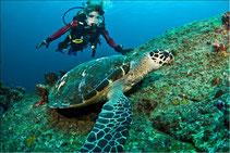 Die Similan Islands bieten Tauchern einmalige Taucherlebnisse.