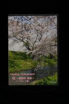 Healing Videograph 桜~鶴岡市馬渡~FIXノーカット版