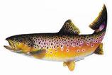 Pescars Sticker mit Fisch-Motiv - Autoaufkleber Bachforelle 24cm