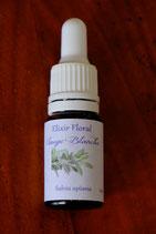 """JS - Elixir floral """"Sauge blanche"""" 10ml"""
