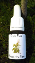 "JS - Elixir floral ""Marronnier Blanc"" (White chestnut) 10ml"