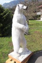 Eisbär Präparat