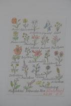 A4 handgezeichnetes Bild Buntstift Beschriftung Winterharte Gartenblumen E. Schulz