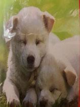 Manta polar fotoimpresión perritos