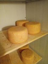 Käse in Blöcken oder Laiben aus biologischem Anbau