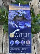 Hydrangea macrophylla (S)witch 'Kassiopeia blue'