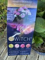 Hydrangea macrophylla (S)witch 'Kassiopeia pink'