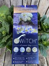 Hydrangea macrophylla (S)witch 'Pandorra white blue'