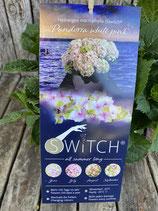 Hydrangea macrophylla (S)witch 'Pandorra white pink'