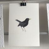 Postkarte - Amsel