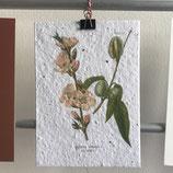 Postkarte aus Samenpapier - Mandelblüte