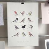 Poster - Vögel