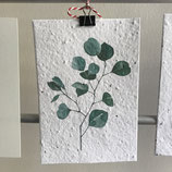 Postkarte aus Samenpapier - Eucalyptus II