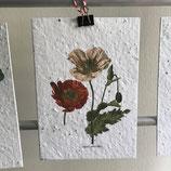 Postkarte aus Samenpapier - Mohn