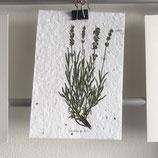 Postkarte aus Samenpapier - Lavendel