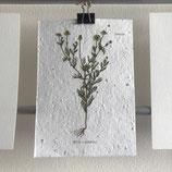 Postkarte aus Samenpapier - Kamille