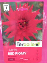 BULBES DAHLIA RED PIGMY