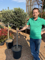 Olive Stämmchen