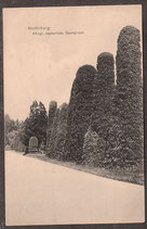 0146.   (O-8105)   Moritzburg   -Königl. Jagdschloss, Baumgruppe-   (PK-00068)