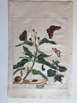 Moses Harris (1730-1788). Le Aurelien (1835)