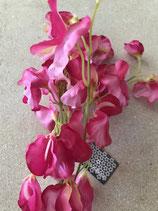 Latyrus Odoratus Blüten in pinkfarben