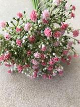 Schleierkraut Bund rose-pink
