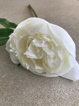 Pfingstrose Blüte in weiß Stiel Länge 40cm