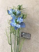 Nigella Starlet Blüte in blau