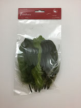 Indianerfeder Grüntöne 16cm 15 Stk Ce