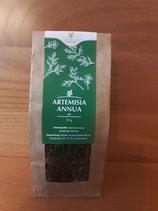 Artemisia annua – Tee