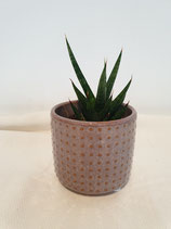 Pot porselein met stip, medium + plant