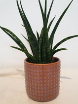 Pot porselein met stip, large + plant
