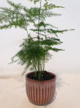 Pot porselein lila, medium + plant