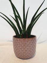 Pot porselein vierkantjes, large + plant